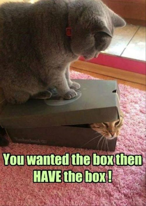 32 Best Funny Animal Pictures #Funny #Animals