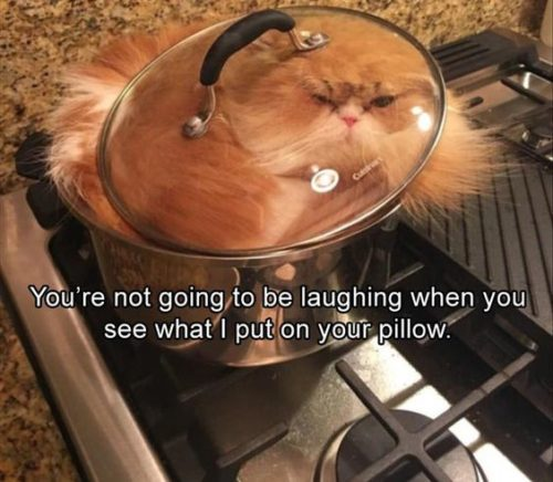 31 Most Funny Animals Memes #funny animals #Funny