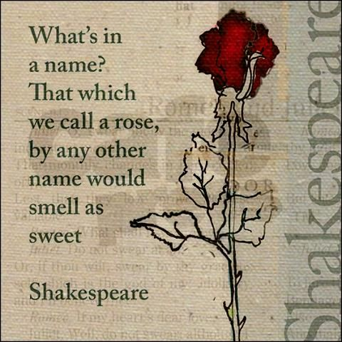 Top 25 Rose Day Quotes