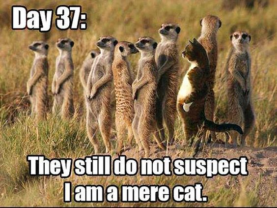 Funny Memes For Animals : Best funny quotes funny animal memes u best funny animal