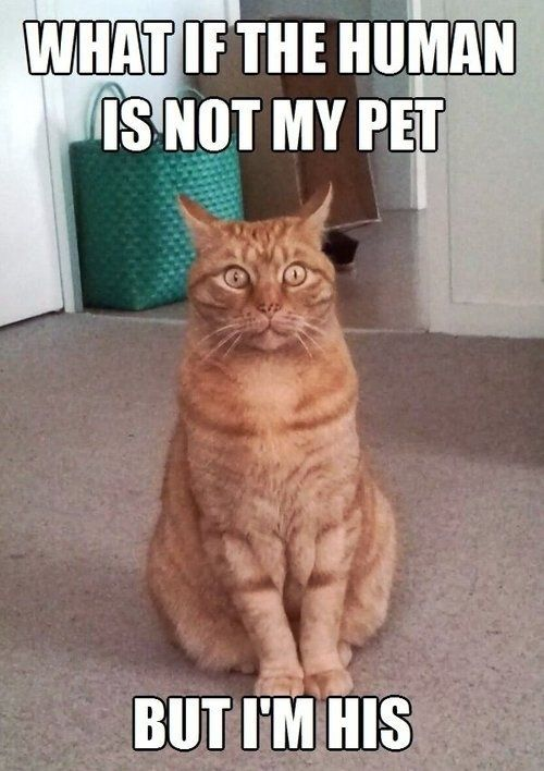30 Funny Animal Memes 9 #Animals #Funny animals ...