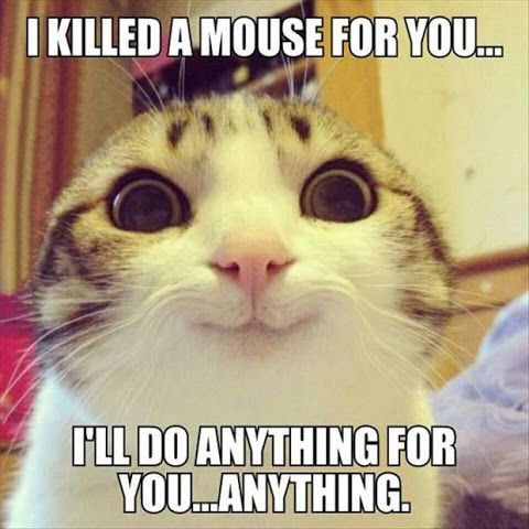 30 Funny Animal Memes QuotesHumor 30 funny animal memes quoteshumor com
