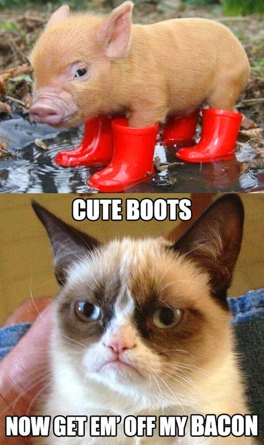 30 Grumpy Cat Funny Quotes 29 Grumpy Cat Funny Memes Quoteshumorcom