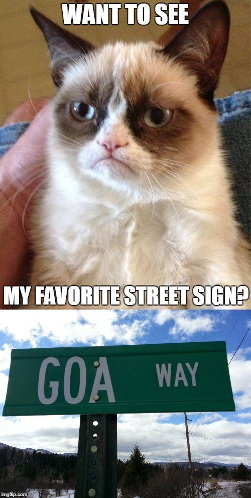 Funny Grumpy Cat Christmas Memes.Grumpy Cat Christmas Memes