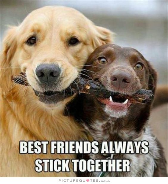 Top 30 Best Friend Quotes 3 Friends Quotes Quoteshumor Com