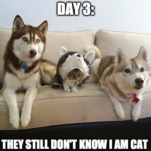 Top 40 funny cat memes 17 funny cats quoteshumor top 40 funny cat memes funny cats voltagebd Gallery