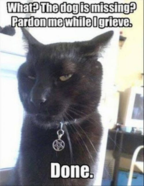 Top 40 Funny Cat Memes Page 4 Of 5 Quoteshumor Com