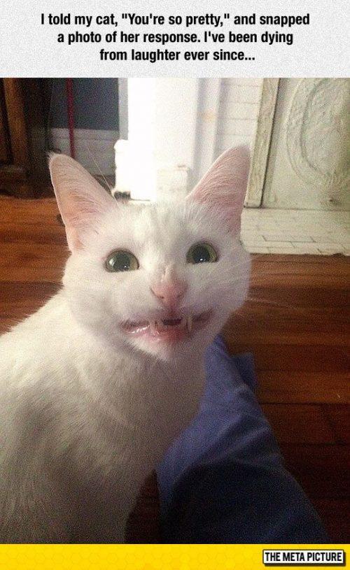 kitten mouth bleeding