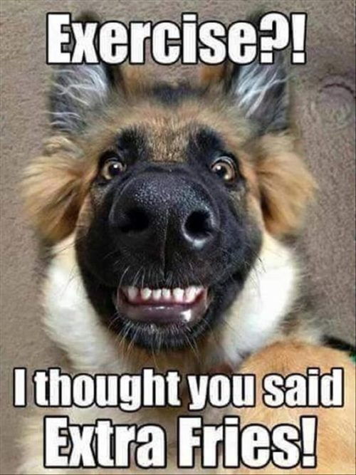 Image of: Funny Memes 32 Best Funny Animal Pictures funny animals Quoteshumorcom 32 Best Funny Animal Pictures Quoteshumorcom
