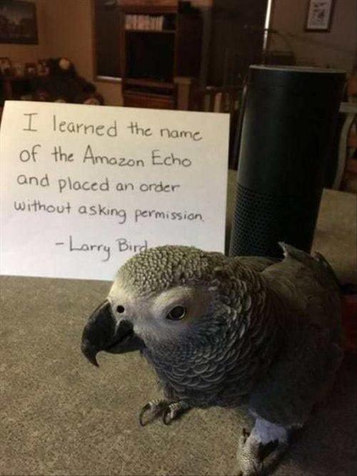 31 Most Funny Animals Memes   QuotesHumor com