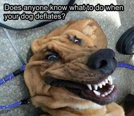 Image of: Pics 31 Most Funny Animals Memes funny Animals funny Quoteshumorcom 31 Most Funny Animals Memes Quoteshumorcom