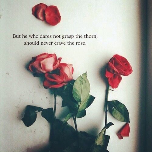 top 25 rose day quotes quoteshumorcom quoteshumorcom