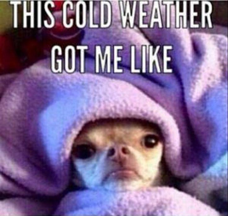 25 cute cold weather quotes_19 25 cute cold weather quotes quoteshumor com quoteshumor com