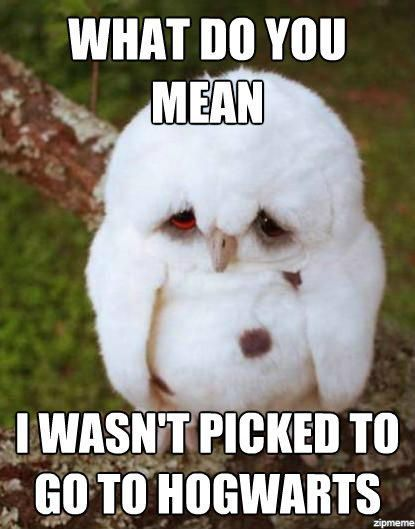 23 Cute Memes 1 22 animals memes that are cuteness overload quoteshumor com