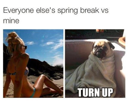 18 Memes About Spring Break 2018 | QuotesHumor.com