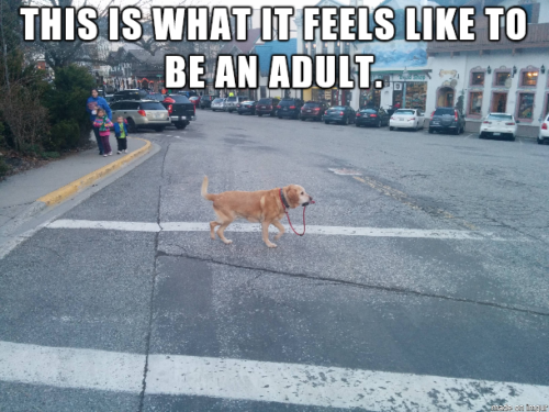Top 24 Most Relatable Adulting Struggles